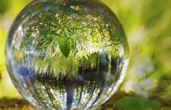image Journée Mondiale de l'Environnement 2020