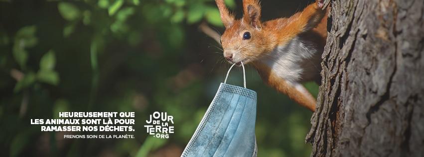 Un écureuil ramasse l'un de nos masques.. à notre place !